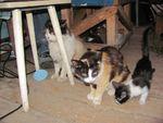 Бывает, животные плодятся бесконтрольно и живут тремя-четырьмя поколениями в одной квартире